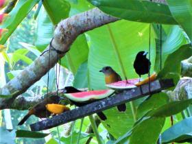 2018 01 8 Saladero birds fruit