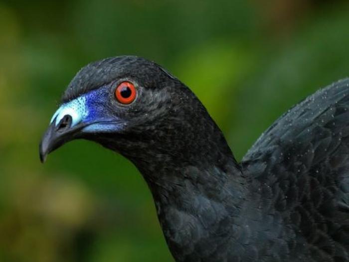 Black Guan2