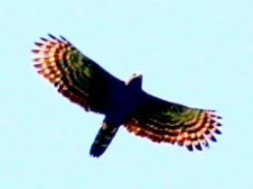 Black Hawk-Eagle4